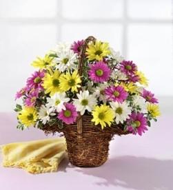 Cesta de flor natural margaritas