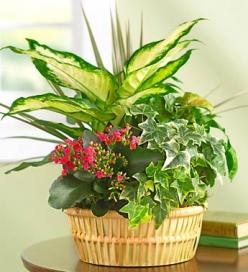 Cesta plantas de temporada