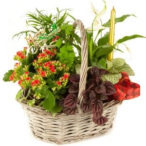 Cesta plantas variadas