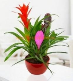Planta  orquídea con macetero