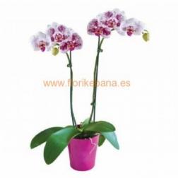 Planta orquidea con macetero