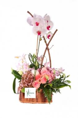 Cesta plantas con orquidea