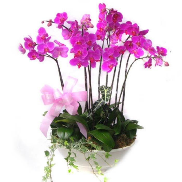 Plantas de orquideas