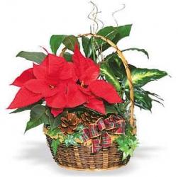 Cesta de  3 rosas rojas